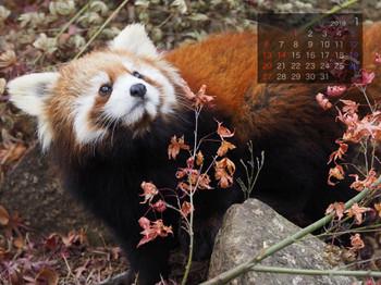 Panda1901milk
