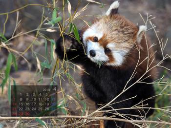 Panda1904milk