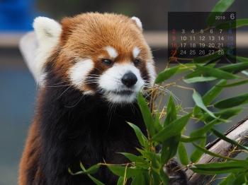 Panda1906eita
