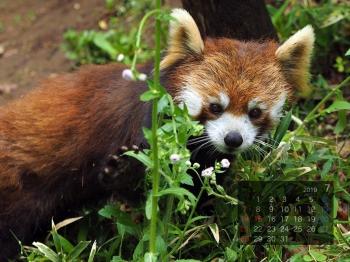Panda1907meita