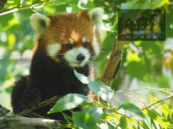 Panda1908marumi