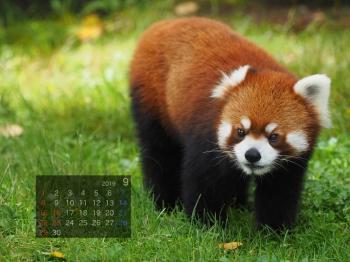 Panda1909asunaro