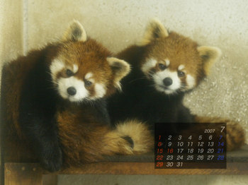 Panda_07a
