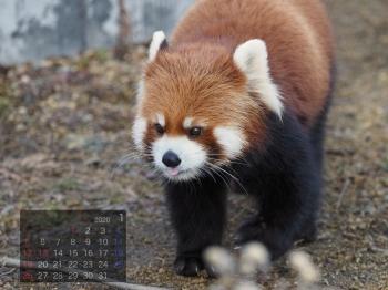 Panda2001marumi