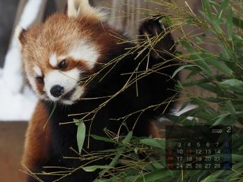 Panda2002riirii