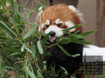 Panda2002taotao