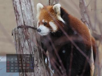 Panda2003marumi