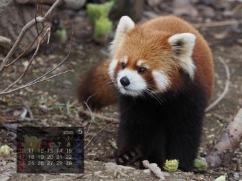 Panda2005marumi