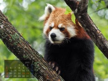 Panda2007riirii