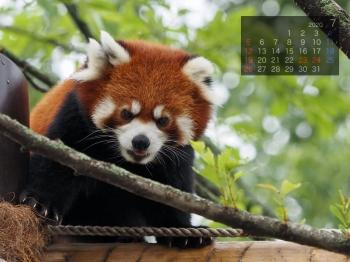 Panda2007taotao