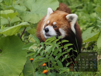 Panda2008eita
