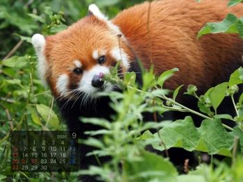 Panda2009marumi