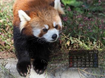 Panda2010riirii