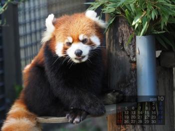 Panda2010taotao