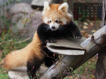 Panda2011renren