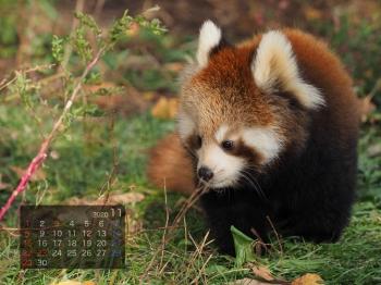 Panda2011rinrin