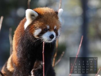 Panda2012eita