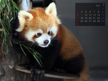 Panda2101renren