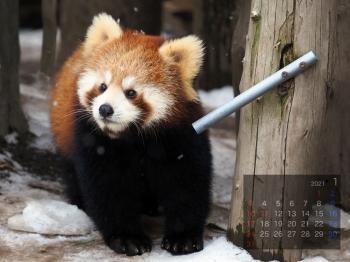 Panda2101rinrin