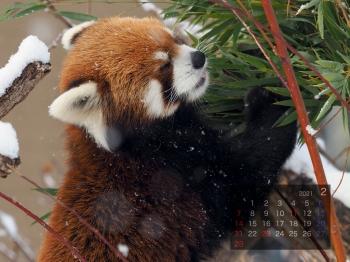 Panda2102eita