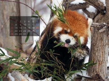 Panda2103marumi