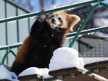 Panda2104renren