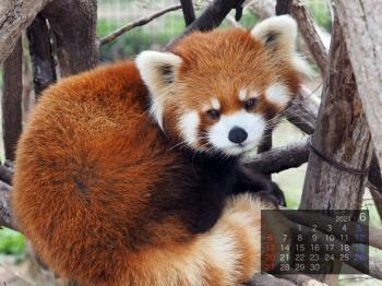Panda2106marumi