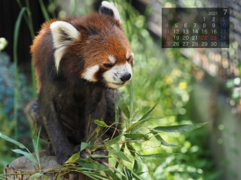 Panda2107chaamin