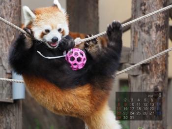 Panda2108renren