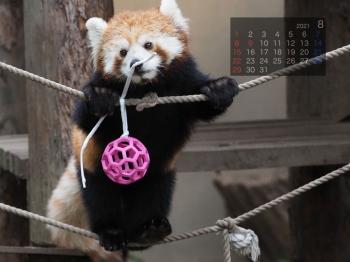 Panda2108rinrin
