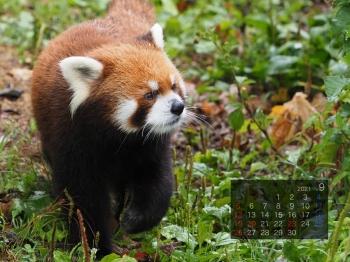 Panda2109eita