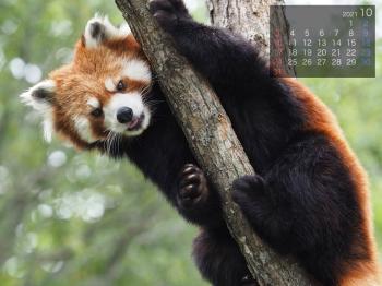 Panda2110riirii