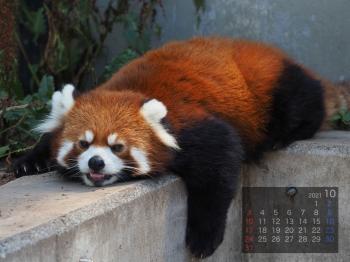 Panda2110taotao